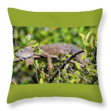 Marathon Lizzard Throw Pillow