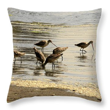 Marbled Godwit Birds At Sunset Throw Pillow by Christine Till