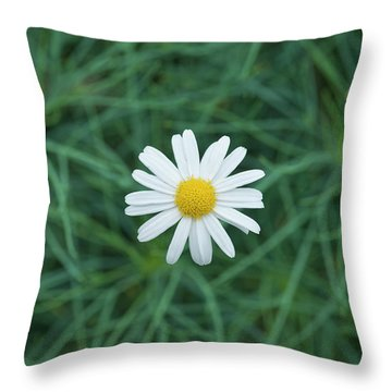 Throw Pillow featuring the photograph Marguerite Chelsea Girl Flower by Tim Gainey
