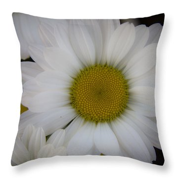 Marguerite Daisies Throw Pillow by Teresa Mucha