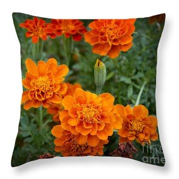 Throw Pillow featuring the photograph Marigolds by Megan Dirsa-DuBois