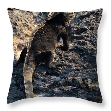 Marine Iguana, Amblyrhynchus Cristatus Throw Pillow