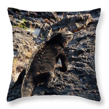 Marine Iguana, Amblyrhynchus Cristatus Throw Pillow