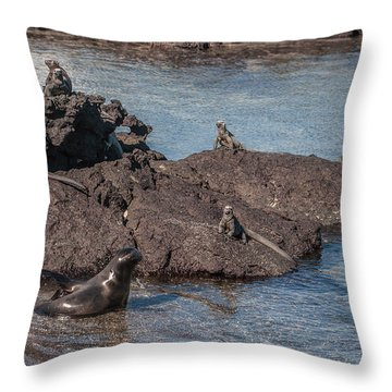 Marine Iguanas And Sealion Pup At Punta Espinoza Fernandina Island Galapagos Islands Throw Pillow