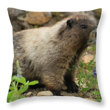Marmot Lunch Throw Pillow