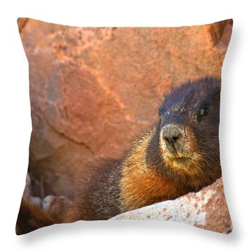 Marmot On The Rocks Throw Pillow