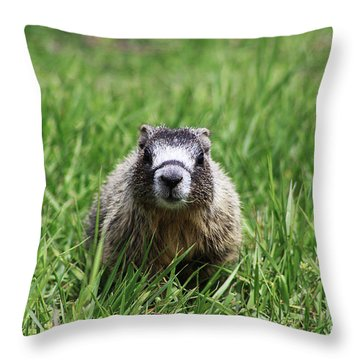 Marmot Pup Throw Pillow by Alyce Taylor