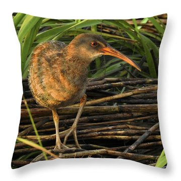 Marsh Hen Throw Pillow