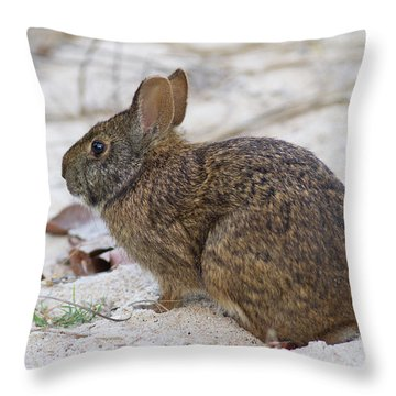 Marsh Rabbit On Dune Throw Pillow