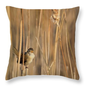 Marsh Wren Throw Pillow by Bill Wakeley