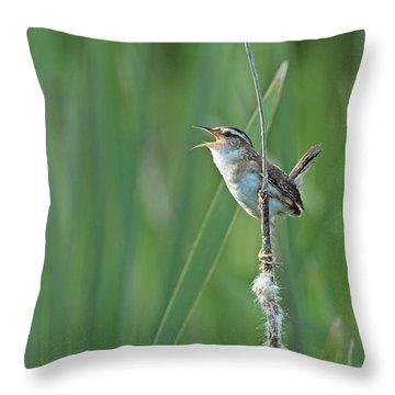 Marsh Wren Throw Pillow