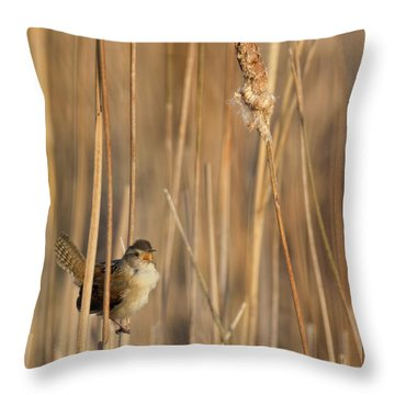 Marsh Wren Square Throw Pillow