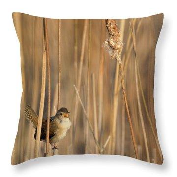 Marsh Wren Square Throw Pillow by Bill Wakeley