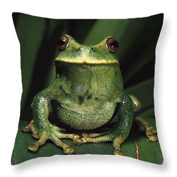 Marsupial Frog Gastrotheca Orophylax Throw Pillow