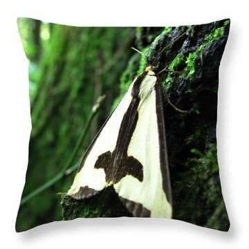 Maryland Clymene Moth Throw Pillow