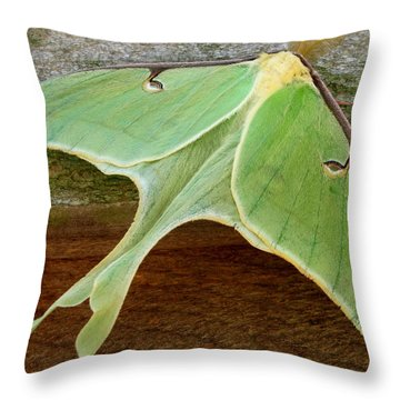 Maryland Luna Moth Throw Pillow