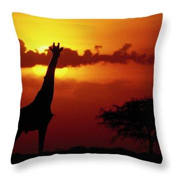 Masai Giraffe Giraffa Camelopardalis Throw Pillow by Gerry Ellis