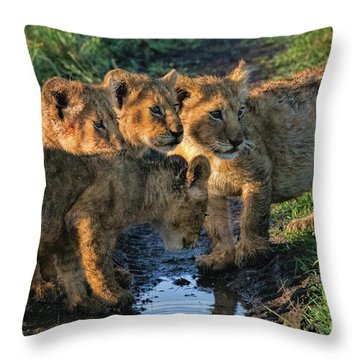 Masai Mara Lion Cubs Throw Pillow by Karen Lewis