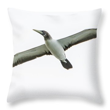 Throw Pillow featuring the photograph Masked Booby 02 by Werner Padarin