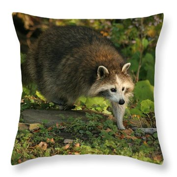 Throw Pillow featuring the photograph Maskless Raccoon by Doris Potter