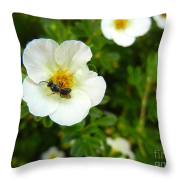 Massachusetts Carpenter Bee Throw Pillow