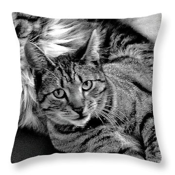 Throw Pillow featuring the photograph Master And Apprentice by Roger Bester