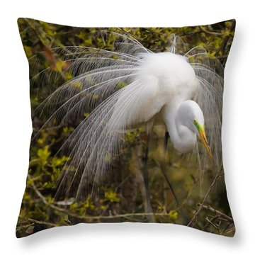 Mating Egret Throw Pillow by Kelly Marquardt