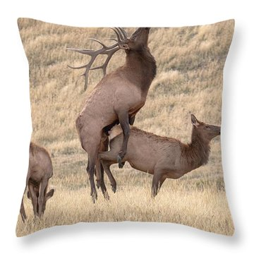 Throw Pillow featuring the photograph Mating  by Kelly Marquardt