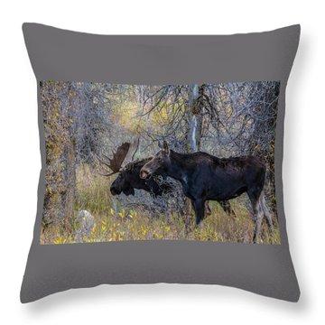 Mating Moose Throw Pillow