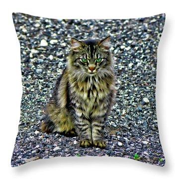 Mattie The Main Coon Cat Throw Pillow