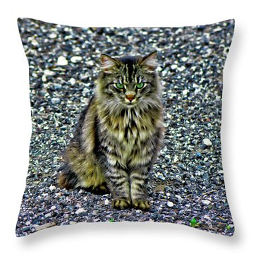 Mattie The Main Coon Cat Throw Pillow