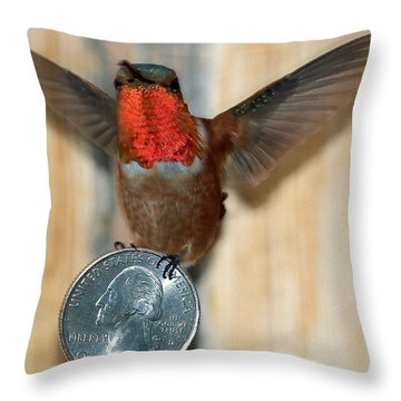 Max And His Quarter II Throw Pillow