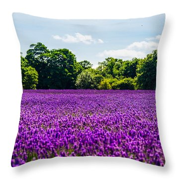 Mayfield Lavender Throw Pillow
