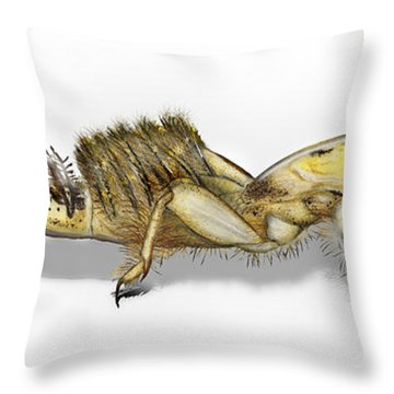 Throw Pillow featuring the painting Mayfly Larva Nymph Ephemera Danica - Moscas De Mayo - Majflue -  by Urft Valley Art