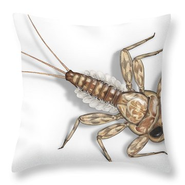 Mayfly Larva Nymph Rithorgena Ecdyonurus Venosus - Moscas De May Throw Pillow