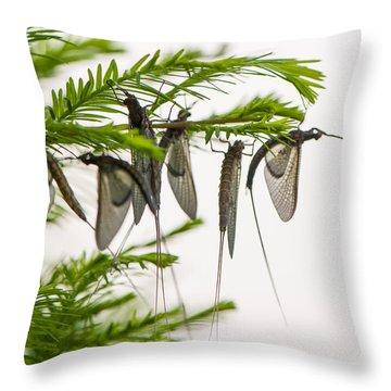 Mayfly Slumbers Throw Pillow