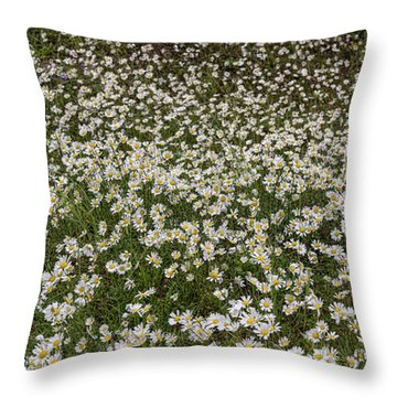 Throw Pillow featuring the photograph Meadow Of Daisey Wildflowers Panorama by James BO Insogna
