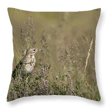 Meadow Pipit Throw Pillow