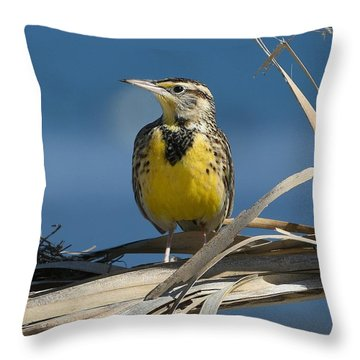 Meadowlark Beauty Throw Pillow