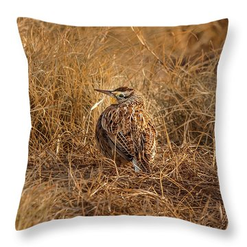 Meadowlark Hiding In Grass Throw Pillow by Robert Frederick