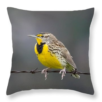 Meadowlark On Barbed Wire Throw Pillow by Marc Crumpler