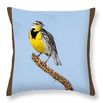 Meadowlark On Mullein Stalk Throw Pillow