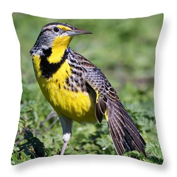 Meadowlark On The Runway Throw Pillow