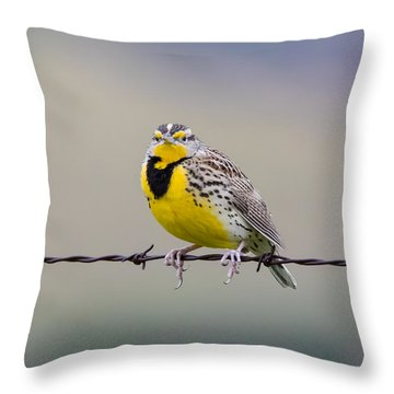 Meadowlark Stare Throw Pillow by Marc Crumpler