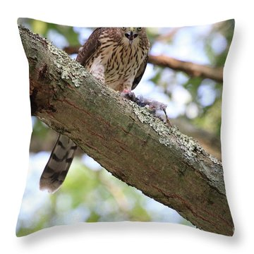 Mean Hawk At Dinner Time Throw Pillow