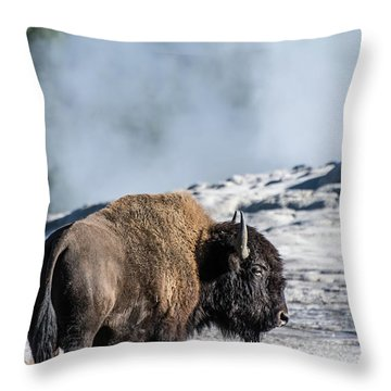 Throw Pillow featuring the photograph Meandering by Colleen Coccia