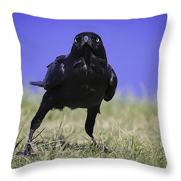 Throw Pillow featuring the photograph Menacing Crow by Chris Cousins