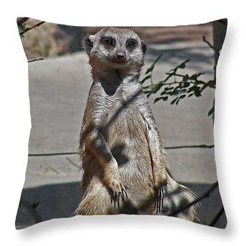 Meerkat 2 Throw Pillow by Ernie Echols