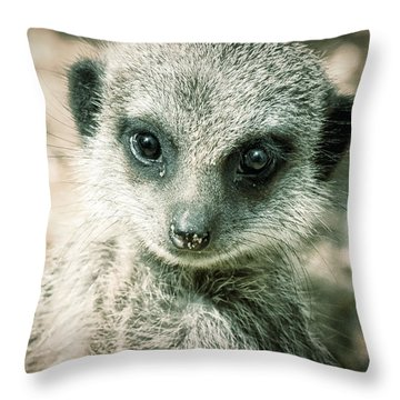 Meerkat Animal Portrait Throw Pillow