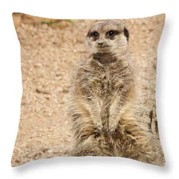 Throw Pillow featuring the photograph Meerkat by Chris Boulton
